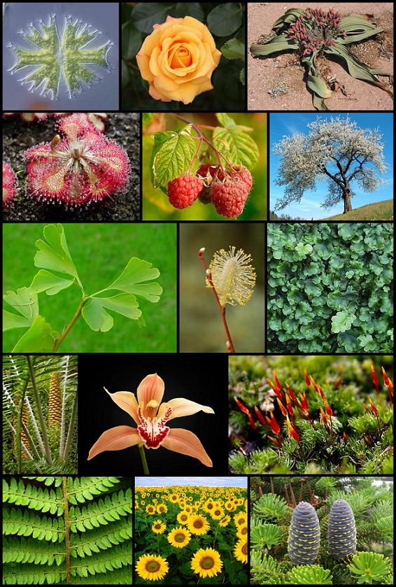 Botany For Dummies Pdf