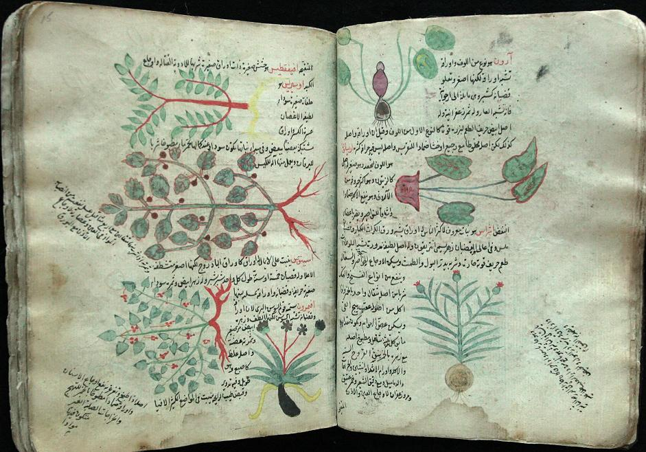 Botany, Herbals and Healing In Islamic Science and Medicine