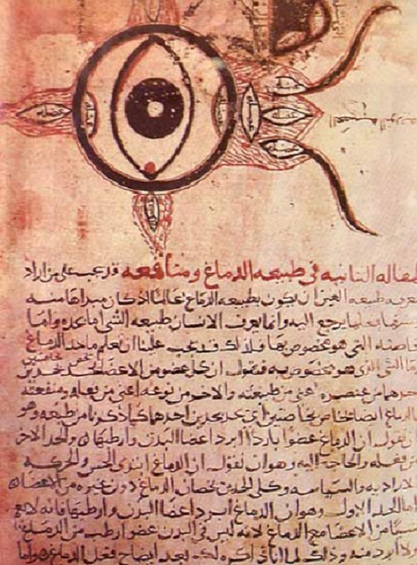 10d71c5bb08 Figure 1  The earliest known medical description of the eye