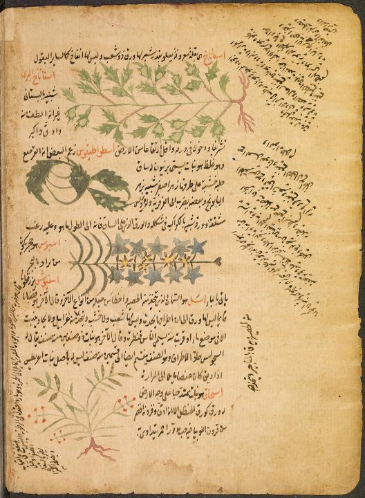 Agriculture In Muslim Civilisation A Green Revolution In