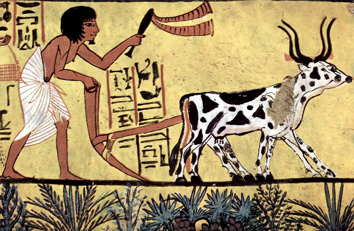 Agriculture in Muslim civilisation : A Green Revolution in Pre-Modern Times