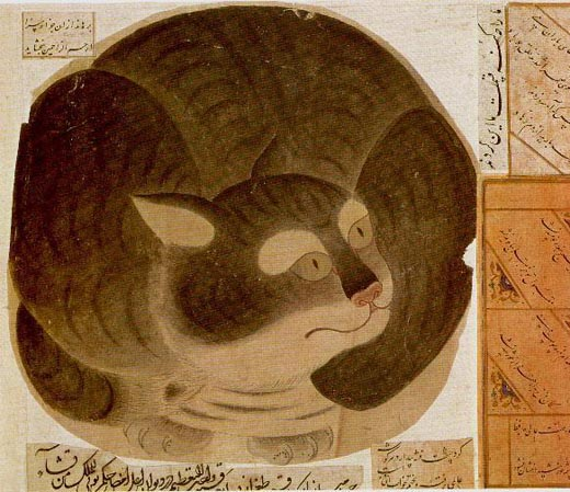 Cats in Islamic Culture