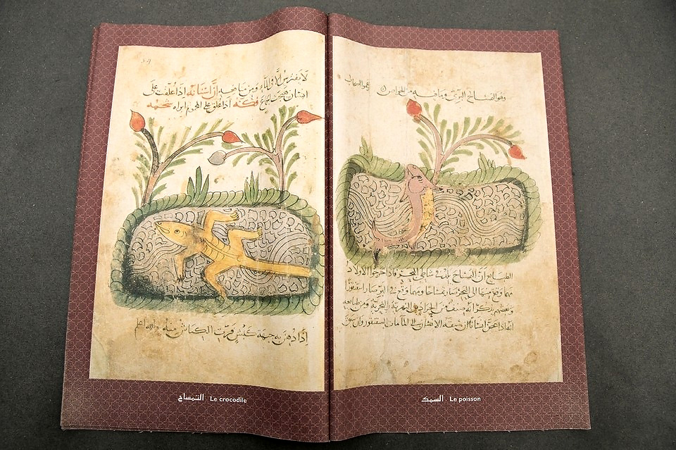 al-Jahiz's Book of Animals: The transcendent value of disgust