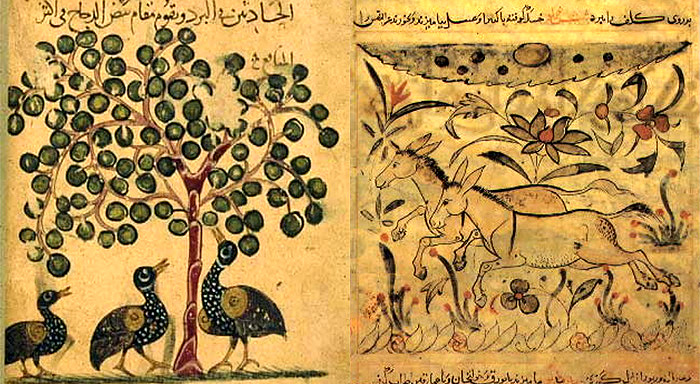 Islamic Foreshadowing of Evolution
