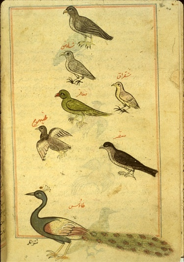 A Sanctuary for Birds: Muslim Civilisation